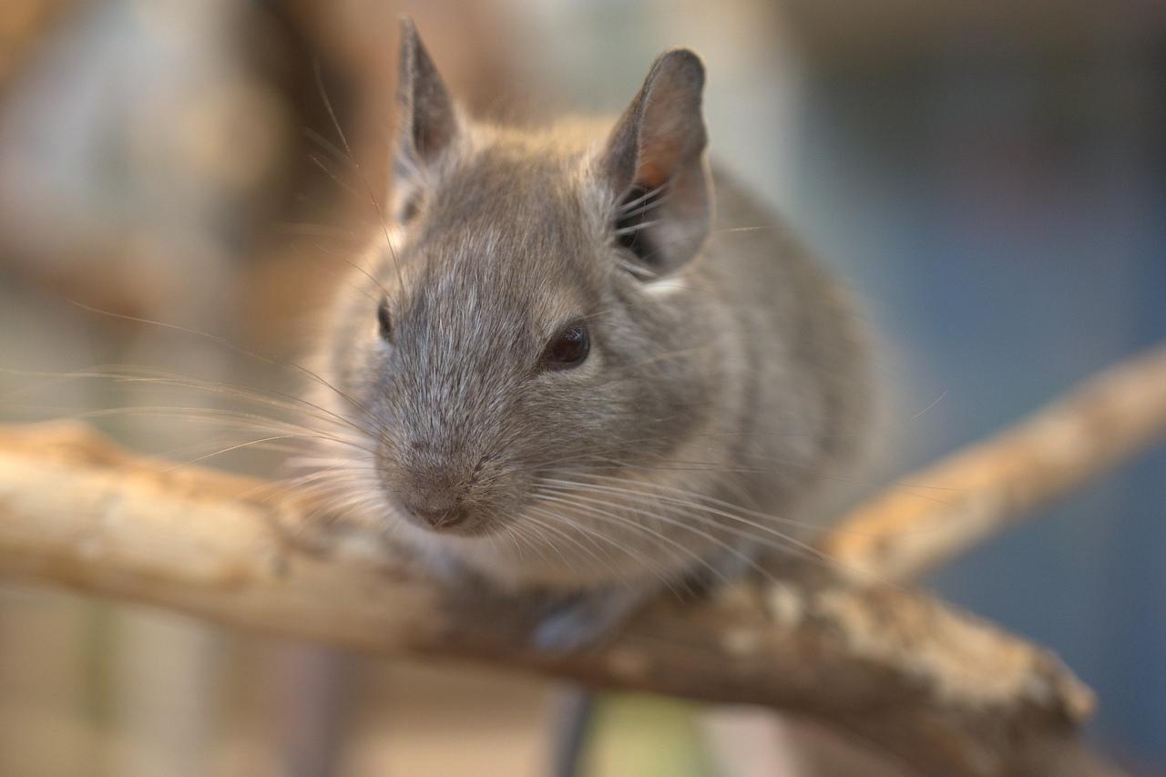 В Марий Эл зарегистрировано 92 случая «мышиной лихорадки»