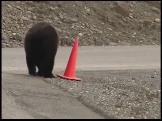 Пока в стране самоизолиция, ремотом дорог в России занимаются медведи