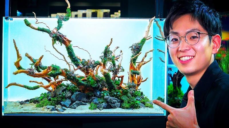 ADA AQUASCAPING WORKSHOP WITH DAICHI ARAKI AT GREEN AQUA INTRODUCING THE AQUASKY RGB