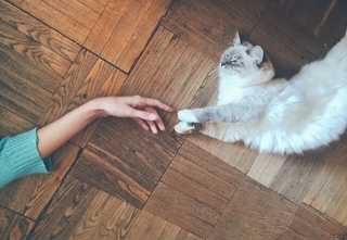 Главное в жизни кота