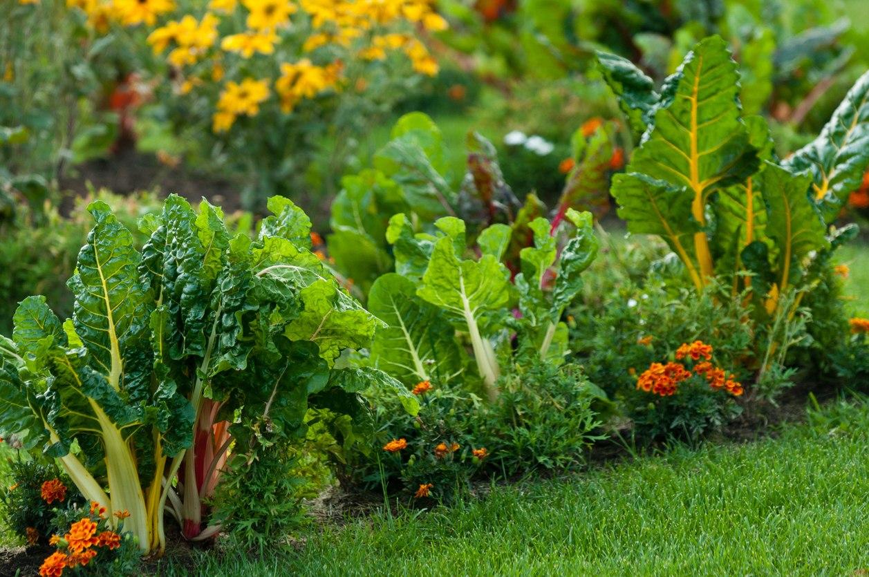 выдадут пищевые растения картинка общеобразовательное учреждение