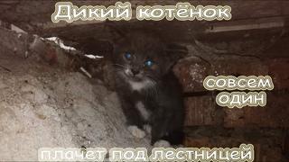 Спасение дикого котёнка (июль 2020)