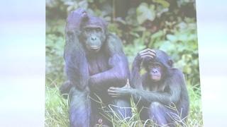 Иваницкий В. В. - Зоосоциология - Социальность у животных