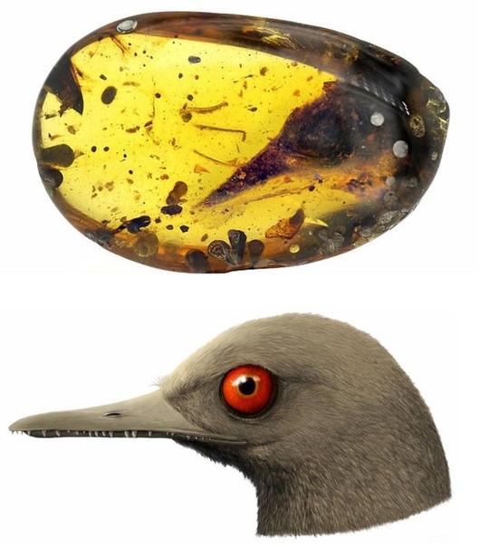 Ученые нашли останки динозавра размером с колибри в янтаре