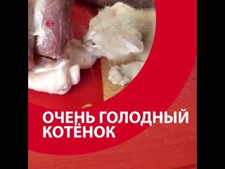 Котёнок очень хочет есть — Москва FM