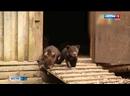 Медвежата-сироты впервые вышли на прогулку