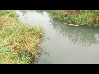 Video by Matvey Aronov