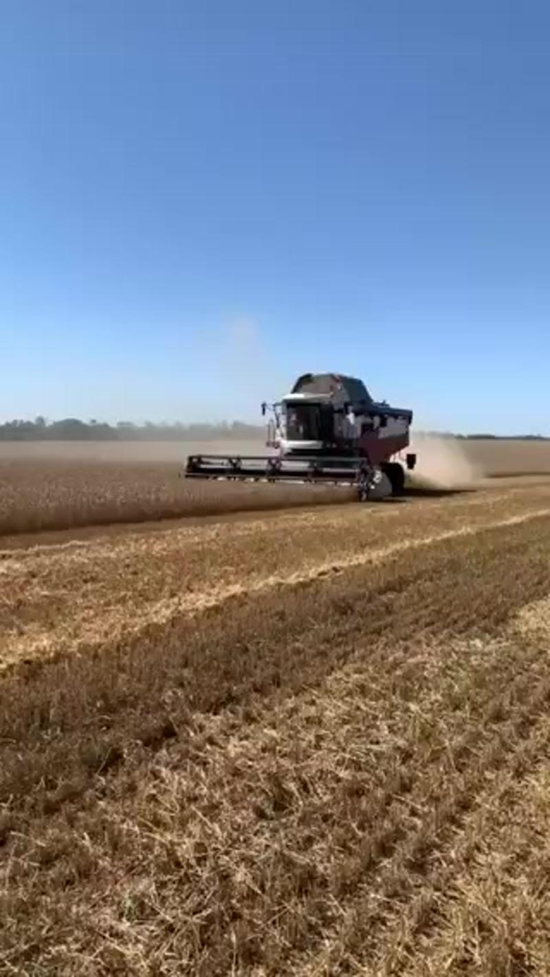 уборка пшеницы урожая 2020