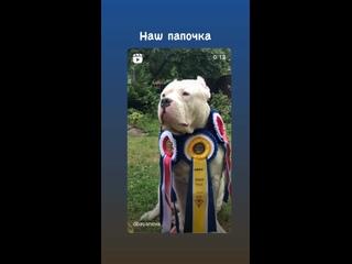 Video by Alesya Denmukhametova