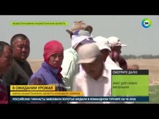 Голодная саранча меняет судьбы казахстанцев