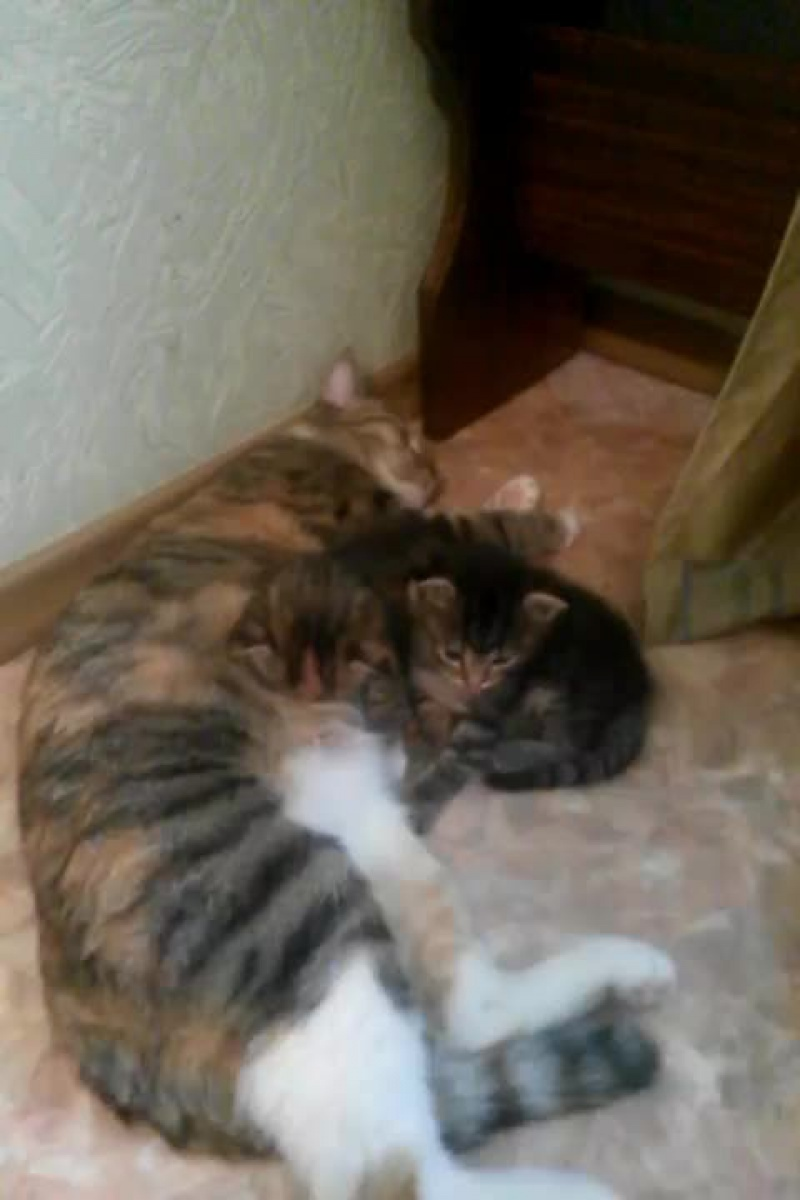 кошка кормит котят ми ми ми !!!