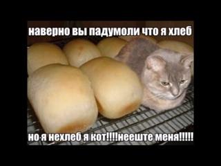 Вы наверное подумали что я хлеб, но я не хлеб я кот не ешьте меня. Вы наверное п