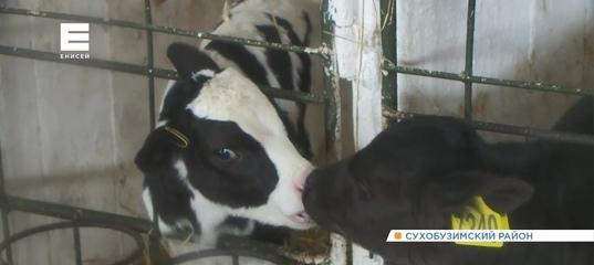 Под Красноярском закрывают крупное фермерское хозяйство: более 100 человек могут остаться без работы