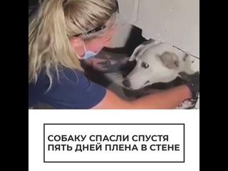 Собаку спасли из бетонной ловушки