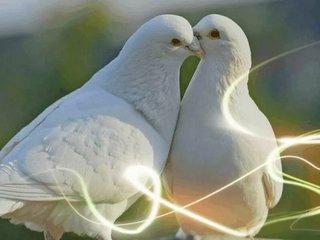 Капель любви