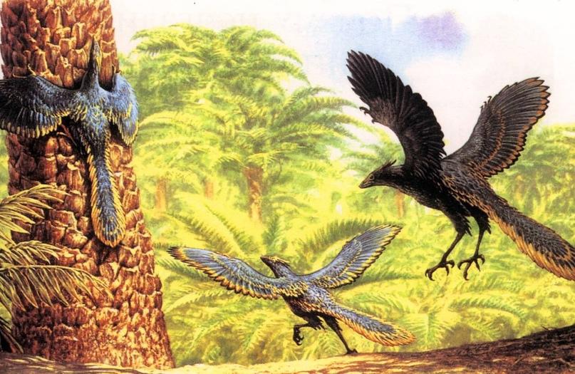 Лекцию о том, как птицы научились летать, прочтет палеонтолог Дмитрий Пащенко 🦅