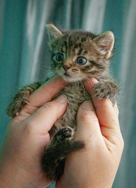 Малютки котятки девочки !!!🆘🆘🆘🆘🆘🆘🆘🆘🆘🆘🆘🆘🆘🆘🆘🆘🆘🆘🆘🆘🆘🆘🆘...
