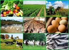 Более 304 млн рублей – на поддержку малых форм хозяйствования