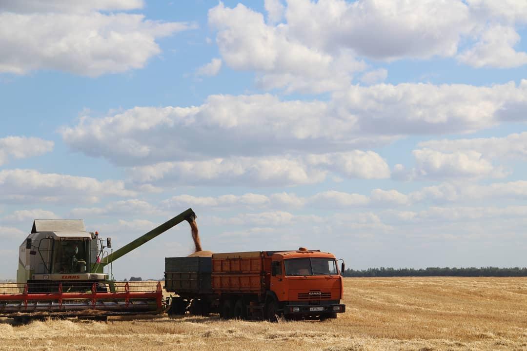 В Петровском районе зерновые и зернобобовые культуры в аграрных хозяйствах убраны на площади 42 676 гектаров