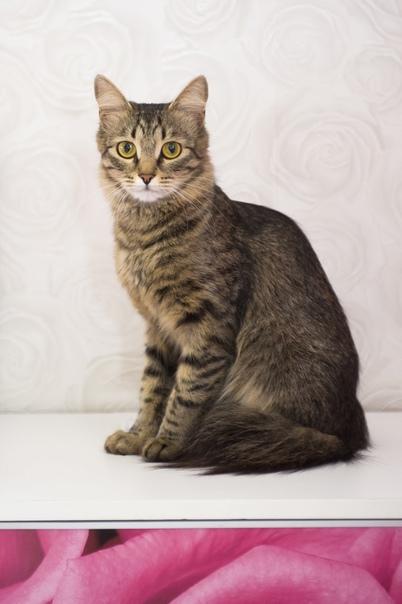 Найдена кошка по адресу Лихачевский проспект 74! К...