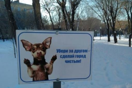 В Ижевске официально запретили выгуливать домашних животных