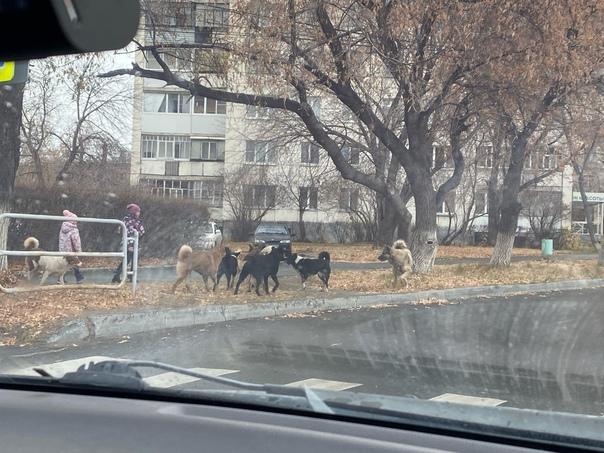 Стая собак прямо в центре города, это вообще норма...