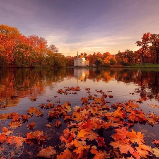 Золотая осень в Царском селе 🍂🍂🍂📷eduard_gordeev_...