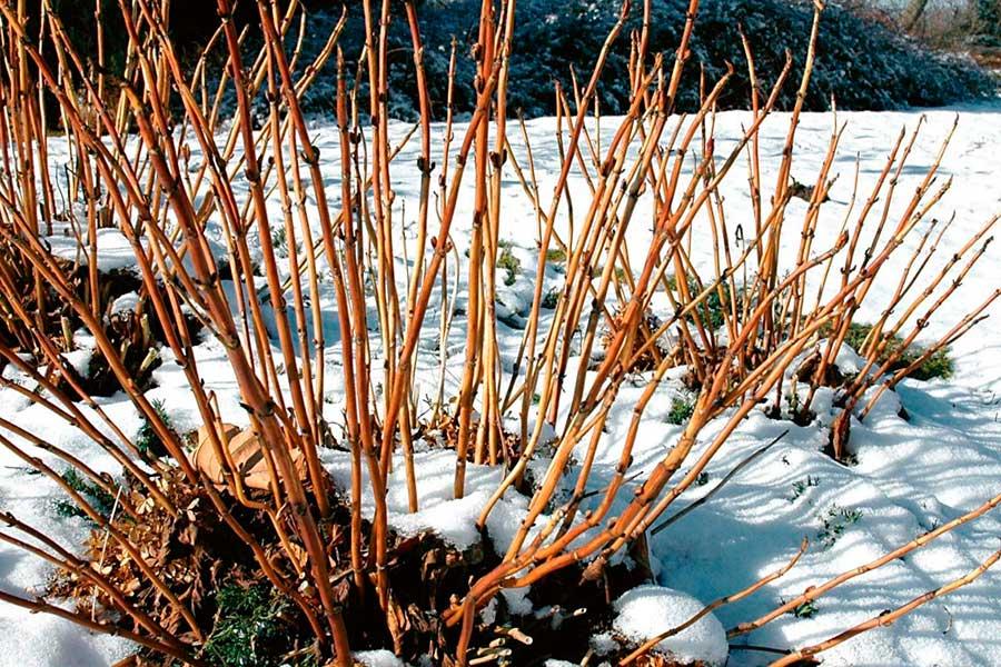 Закаливание семян в марте в снегу