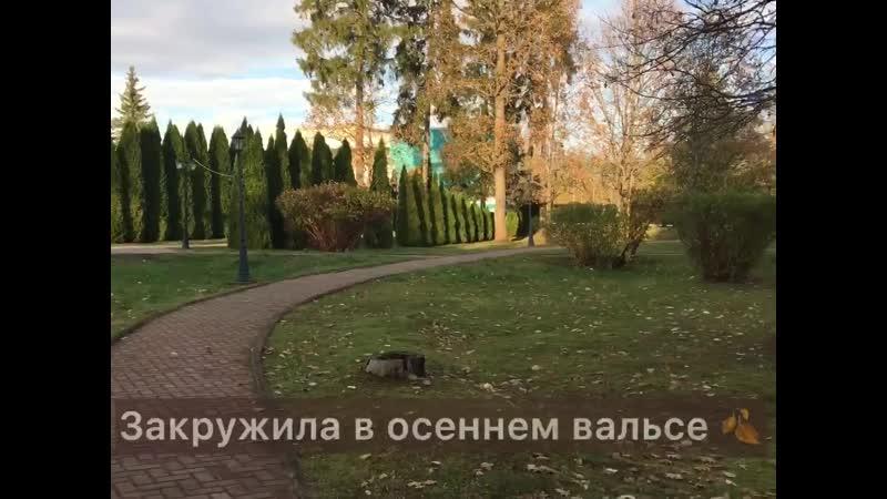 Золотая осень в КО Бекасово
