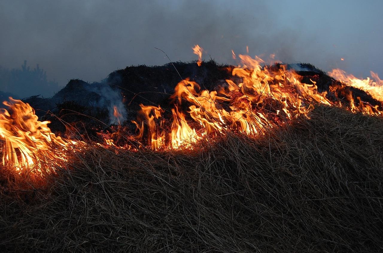 С начала пожароопасного сезона в регионе произошло девять лесных пожаров