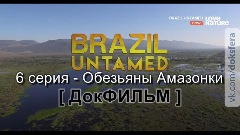 Дикая Бразилия 6 серия Обезьяны Амазонки