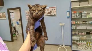 Все проходили мимо кота отталкивали и брезгливо смотрели А он просил помощи Нотоэдроз излечим