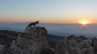 Природа и жизнь Дикие животные, звери, птицы и наша  дружба.