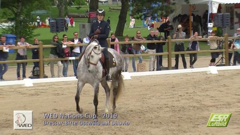 Working Equitation Pferd International 2019 Dressur Dessage Birte Ostwald Diluvio