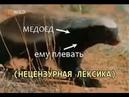 Чокнутый говнюк медовый барсук (Медоеду плевать)