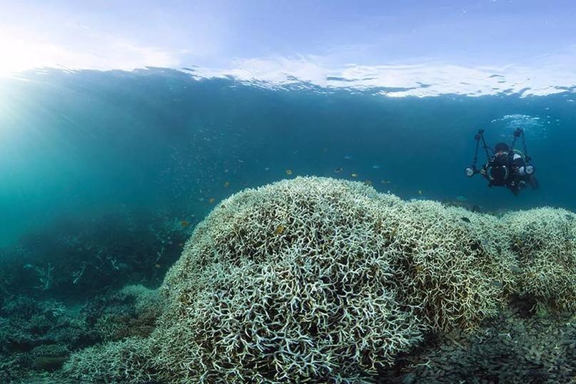 Большой Барьерный риф, изображение №3