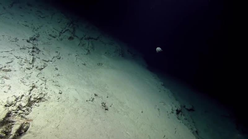 Исследование горы Конрад в проливе Анегада