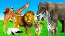 Зоопарк для самых маленьких Развивающие мультики про животных для детей