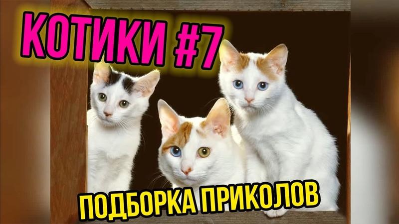 ПОДБОРКА ПРИКОЛОВ С КОТИКАМИ КОТИКИ 2019 7